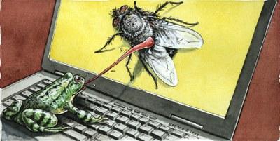 20121018,Frosch,Fliege,Computer.jpg