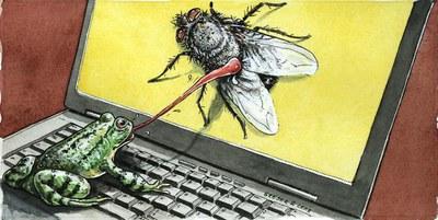 20121018,Frosch,Fliege,Computer_klein.jpg